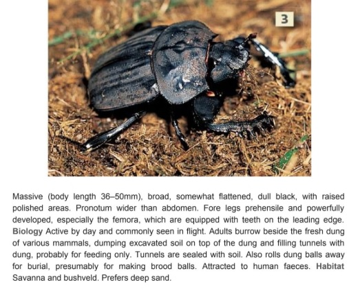 Field Guide to Insects of South Africa, Mike Picker.jpg