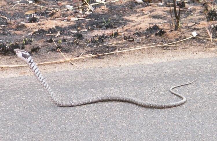 Africa Wild Reptile Book Snakes Photos Descriptions