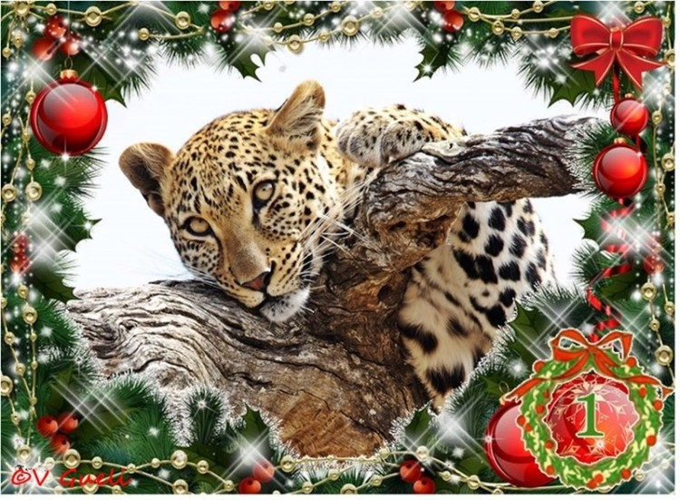 The 12 Days of Christmas - Africa Wild