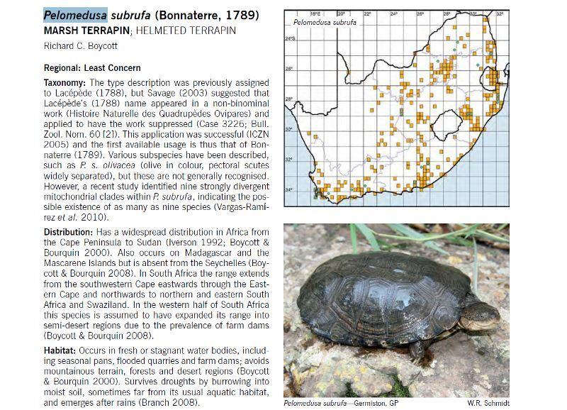Aw Reptile Book Turtles Tortoises Photos Descriptions